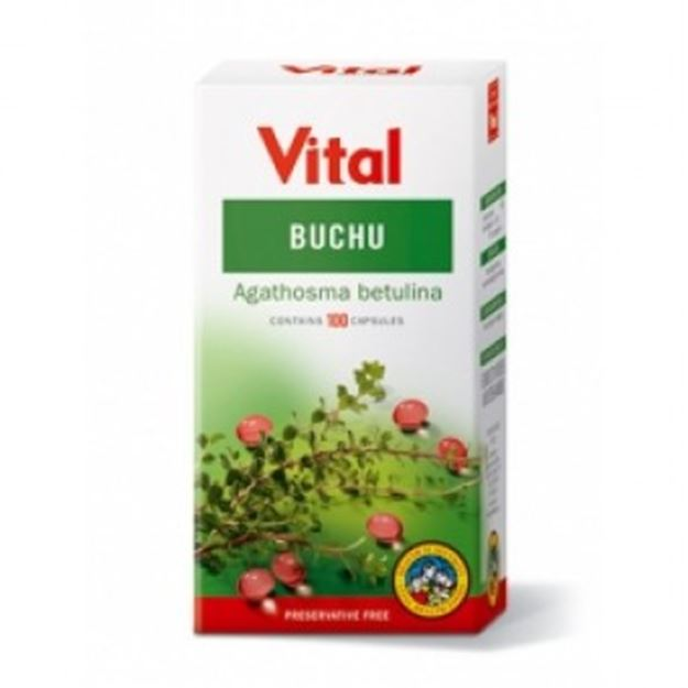 Picture of Vital Buchu